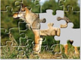 Forest animal jigsaw puzzles