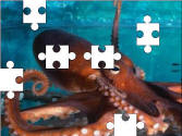 Octopus jigsaw puzzle