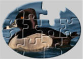 Duck jigsaw puzzles