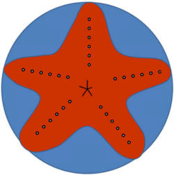 Help me write a 6 page paper on starfish