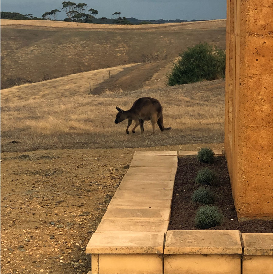 Kangaroos surrounded us at dusk and dawn during our stay at Sky House.