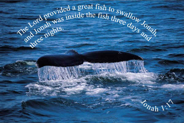 Jonah and the big fish memory verse wallpaper for Bible verses about fish